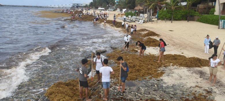 Limpieza en Playa del Carmen
